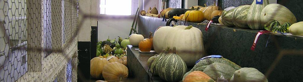 Stokes County Agricultural Fair
